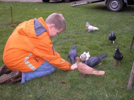 Tauben-Fütterung