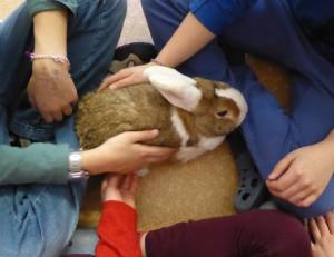 neutrale menschliche Berührungen, neutrales Verhalten des Kaninchens
