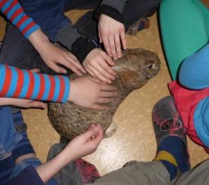 dominante Hände, unterwürfiges Kaninchen
