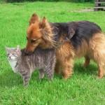 Hund und Katze friedlich zusammen